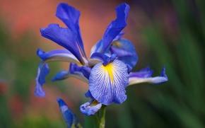 Picture flower, nature, paint, petals, exotic