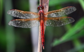 Picture macro, lights, background, wings, dragonfly, transparent, stem