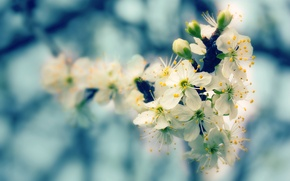 Picture nature, tree, flowering