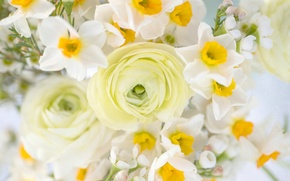 Picture bouquet, daffodils, Ranunculus