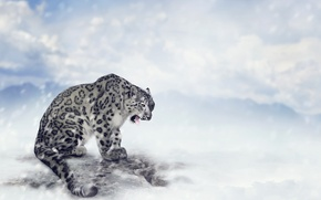 Picture clouds, snow, mountains, predator, snow leopard, bokeh, IRBIS