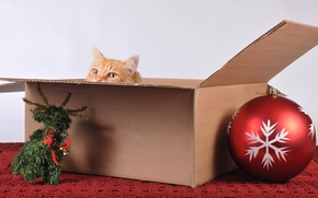 Picture cat, holiday, box, toys