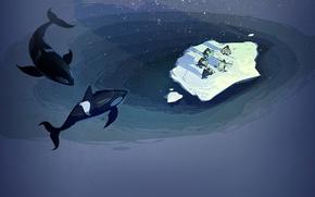 Picture the ocean, penguins, floe, steam, orca
