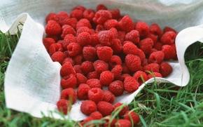 Wallpaper berry, yummy, a lot, Raspberry
