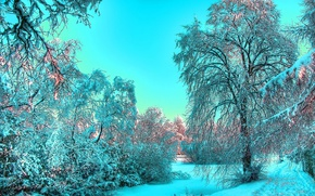 Picture winter, the sky, snow, morning, frost, Landscape