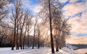 Wallpaper trees, Park, winter, snow, nature