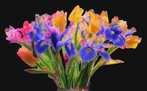 Picture line, flowers, paint, Tulip, bouquet, iris