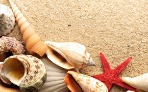Wallpaper sea, star, shell, sand