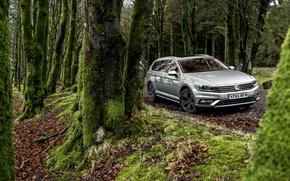 Picture forest, Volkswagen, Volkswagen, Passat, Passat