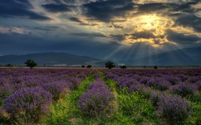 Picture field, forest, summer, the sky, grass, the sun, clouds, rays, trees, landscape, flowers, mountains, nature, …