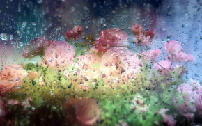 Picture glass, water, drops, flowers