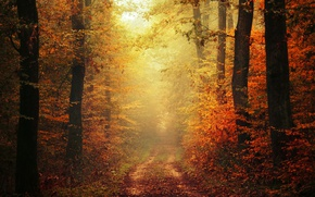 Wallpaper autumn, leaves, fog, way, pathway, trail, autumn colors, path, mist, fall, foliage, woodland, fall colors