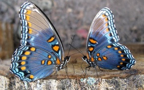 Wallpaper pair, butterfly, stone