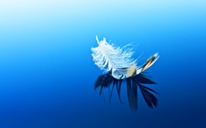 Picture reflection, on the water, a feather