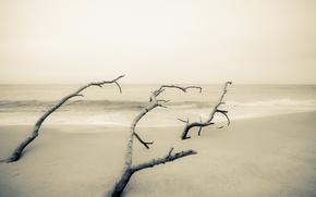 Picture sea, trees, minimalism