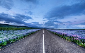 Picture road, flowers, horizon, Iceland