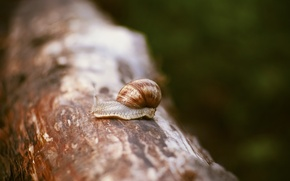 Picture macro, tree, snail, sink