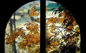 Wallpaper Rowan, Orange, Window