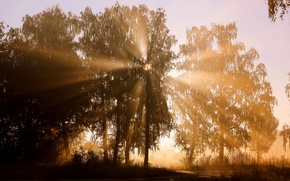 Wallpaper rays, trees, the sun