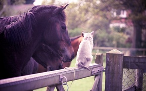 Picture cat, animals, summer, horse, the fence, garden, friendship, white, Olivia bell