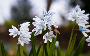 Picture Grass, Green, Flowers, Spring, Meadow, Insect, Bloom, Bee