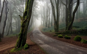 Picture forest, road, trees
