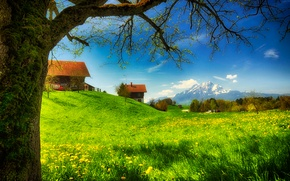 Picture flowers, Sunny, houses, mountains, home, moss, glade, greens, grass, spring