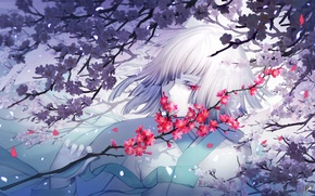 Picture girl, flowers, branch, Sakura, white hair, danhu