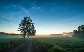 Picture road, field, grass, trees, fog
