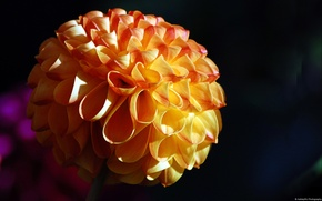 Picture flower, macro, Ribbon Flower