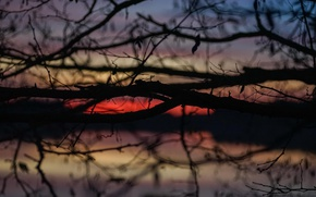 Picture twilight, sunset, lake, dusk, branches, silhouettes