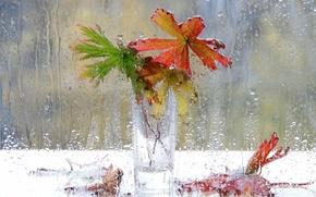 Picture drops, flowers, rain, window, vase, still life