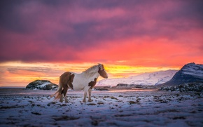 Picture the sky, snow, mountains, the wind, paint, horse, Iceland