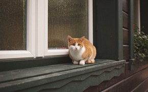 Picture cat, cat, look, house, window, red, sill, sitting