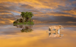 Picture the sky, water, clouds, landscape, nature, tiger, rock, palm trees