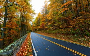 Picture road, autumn, leaves, nature, mountain, colors, colorful, road, trees, nature, autumn, mountain, leaves, walk, path, …