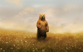 Wallpaper bear, dandelions, clouds
