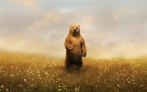 Picture clouds, bear, dandelions