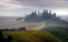 Picture field, landscape, fog, morning, Tuscany