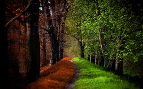 Picture road, autumn, forest, trees, nature, Park, spring, forest, road, trees, nature, park, autumn, leaves, spring, …