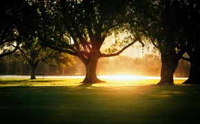 Picture light, trees, the city, Park, heat, shadows