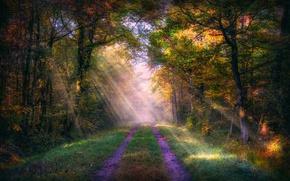 Picture autumn, road, sunray, woodland, sunlight