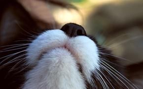 Picture cat, mustache, macro, focus, face, cat, macro, focus, 1920x1280, moustache