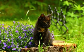 Picture flowers, stump, kitty