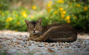 Picture cat, look, stay, track, pebbles, taupe