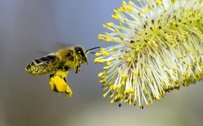Wallpaper flower, bee, pollination