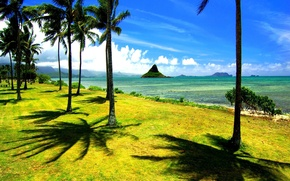 Picture beach, palm trees, the ocean, shore