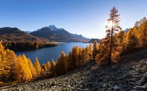Picture autumn, trees, mountains, lake, Switzerland, Alps, Switzerland, Alps, Lake Sils, The Upper Engadine, lake Sils, …