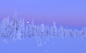 Picture winter, forest, snow, trees, night, the moon, moon, forest, trees, night, Snow, winter, Finland, Finland, …