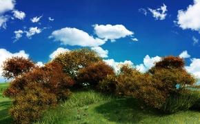 Wallpaper greens, the sky, clouds, Bush